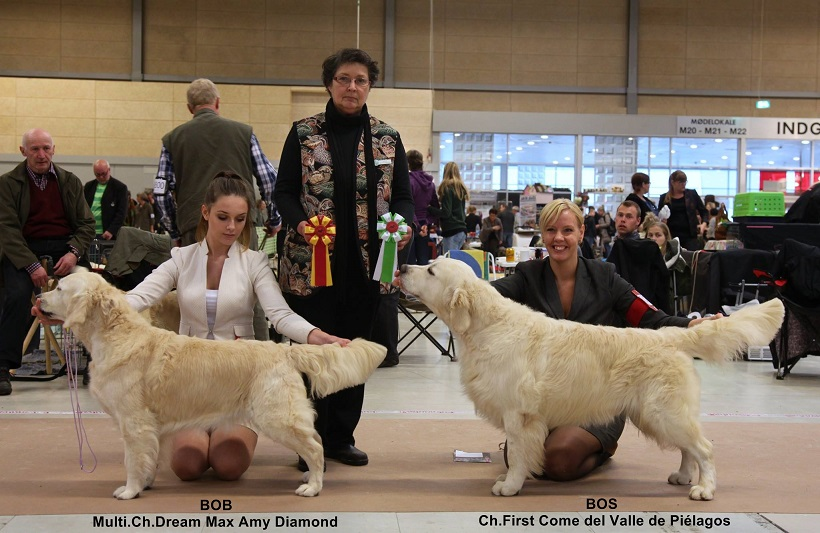 First Come del Valle de Piélagos(Elliot), MEJOR MACHO CC & CACIB AND Danish Show Champion!!!!!