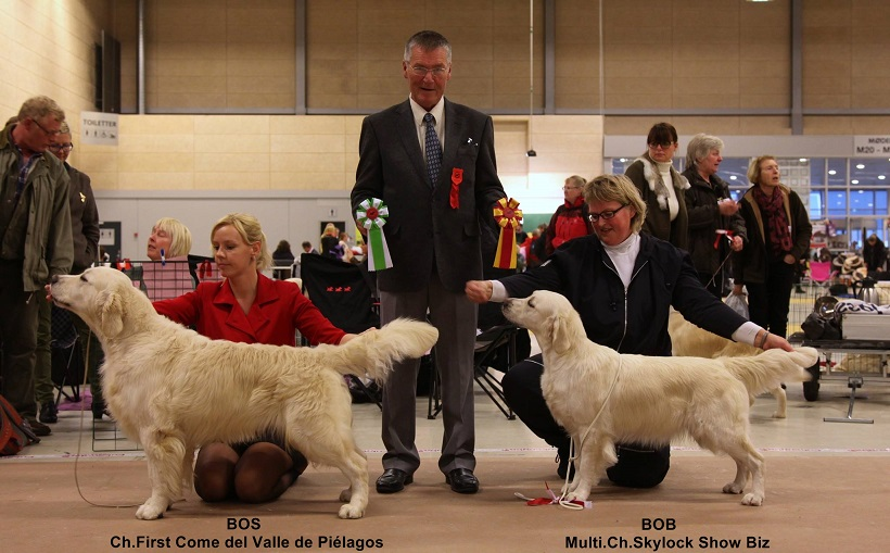 First Come del Valle de Piélagos(Elliot), MEJOR MACHO CC & CACIB AND Danish winner Champion!!!!!